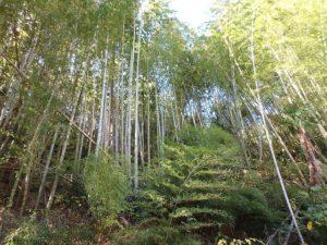 千葉県南房総市山下の売家 山あい趣味のプチ別荘 南総ユニオン株式会社 竹林を掃除しましょう