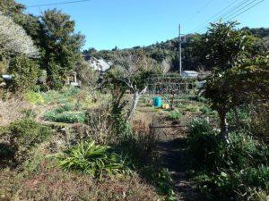 千葉県館山市の中古住宅 南房総の古民家 南総ユニオン株式会社 季節の野菜を収穫できます