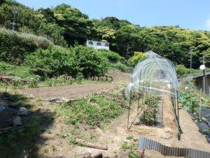千葉県南房総市沓見の売地 南房総の不動産 南総ユニオン株式会社 こんな風に菜園を楽しめますね