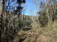 千葉県君津市清和市場の不動産 鹿野山の山林 南総ユニオン株式会社 広大な3万坪の山林です