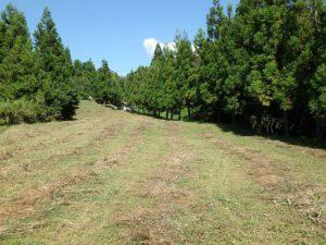 千葉県鴨川市の売地 鴨川市の広い土地 南総ユニオン株式会社 果樹や菜園はもちろん