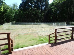南房総で愛犬と遊ぶ-大型ドッグラン別荘-緑の自然に囲まれた隠れ家
