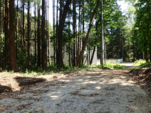 杉の木も伐採-緑の別荘