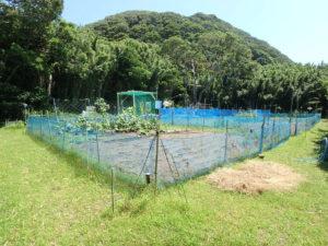 竹藪だった土地も見事な菜園に