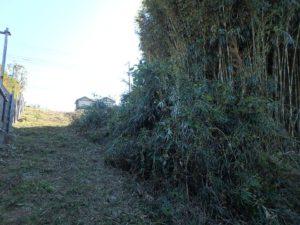 千葉県館山市佐野の土地 別荘用地 南房総の土地 竹を切ればすればもっと広い