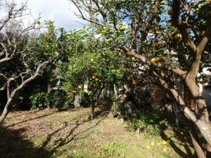 千葉県南房総市千倉町北朝夷の中古住宅 南房総の広い庭付戸建 果樹のある物件 南総ユニオン株式会社 果樹も数本ありました