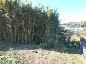 千葉県館山市佐野の土地 別荘用地 南房総の土地 この竹藪も対象地