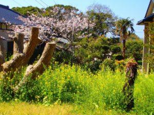 千葉県館山市布沼の不動産 アトリエ別荘 中古物件 季節の花に囲まれます