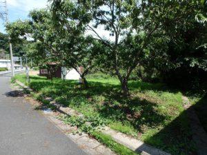 千葉県南房総市上滝田の不動産 房総の土地 三芳村の物件 敷地に栗の木が二本