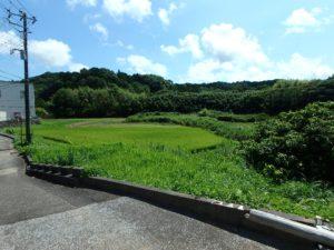 千葉県南房総市千倉町北朝夷の不動産 田舎暮らし移住向き物件 平家 隣地は田舎の落ち着く風景です