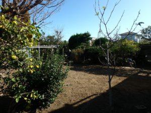 千葉県館山市長須賀の中古住宅 館山の不動産 柑橘系果樹も育ってる