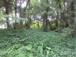 千葉県南房総市本織の不動産 人里離れた環境 仙人暮らし 地勢はほぼ平坦地です