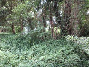 千葉県南房総市本織の不動産 人里離れた環境 仙人暮らし まずは下草処理からです