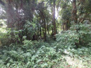 千葉県南房総市本織の不動産 人里離れた環境 仙人暮らし 木を間引いて明るくしたい