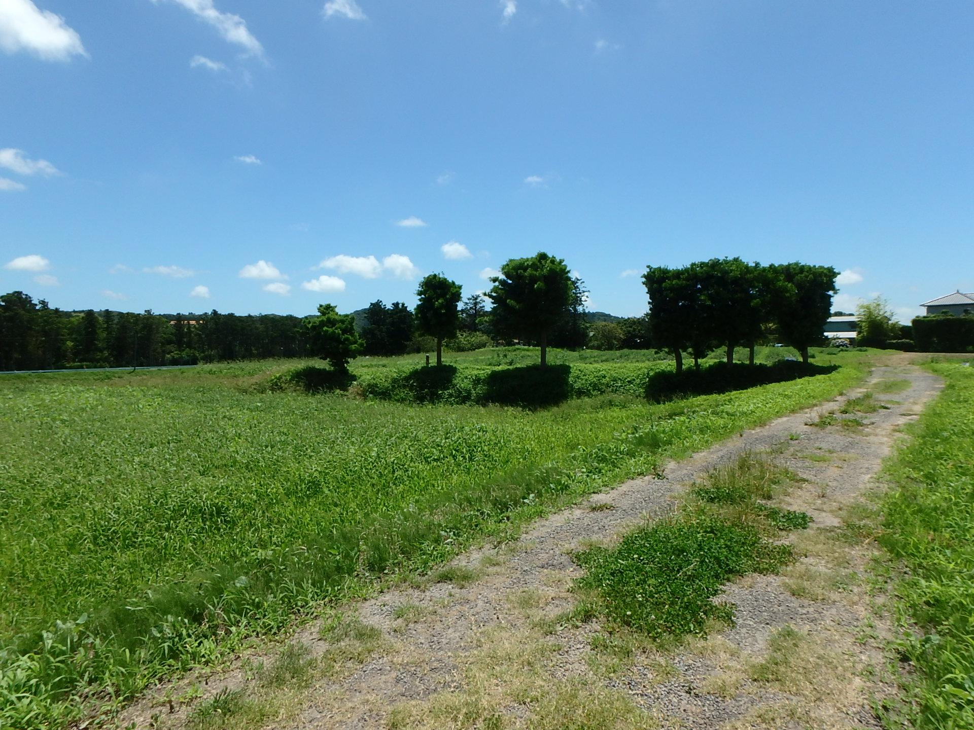千葉県南房総市千代の不動産、旧三芳村の土地、広大な土地、田舎暮らし