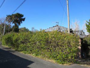 千葉県館山市の不動産,古家付き土地,移住用地,生垣に囲まれた敷地南側