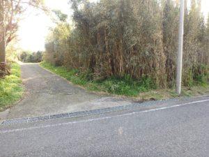 千葉県館山市見物の不動産,海近くの土地,別荘用地,画像右側の竹藪から敷地