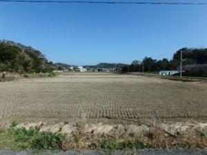 千葉県南房総市下堀の不動産,旧三芳村中古戸建,田舎暮らし,夏には稲穂の絨毯です