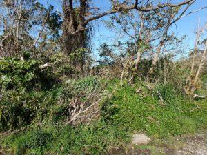 千葉県館山市見物の不動産,海近くの土地,別荘用地,南側には竹が無い