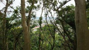 千葉県館山市小原の不動産 南房総の里山 南総ユニオン株式会社 木を掃除すれば海が見える
