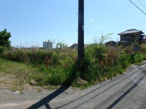千葉県南房総市千倉町の不動産,海が見える土地,別荘用地,広い土地,現況は残念ながら草だらけ