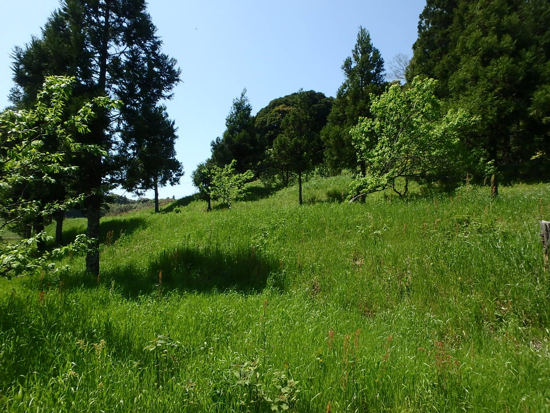 千葉県鴨川市平塚の不動産、山林、キャンプ用地に最適、お申込みいただきました