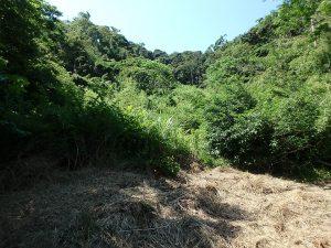千葉県館山市正木の不動産、山林、小屋付き、ドッグラン、動物飼育、個人キャンプ場、未開拓ゾーンもある