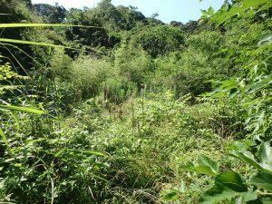 千葉県館山市正木の不動産、山林、小屋付き、ドッグラン、動物飼育、個人キャンプ場、これかなり広いな