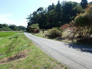 千葉県館山市正木の不動産、山林、小屋付き、ドッグラン、動物飼育、個人キャンプ場、前面の接道です