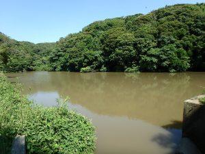 千葉県館山市正木の不動産、山林、小屋付き、ドッグラン、動物飼育、個人キャンプ場、向かい側にある堰です