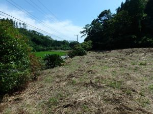 千葉県館山市正木の不動産、山林、小屋付き、ドッグラン、動物飼育、個人キャンプ場、のどかな田舎の環境です