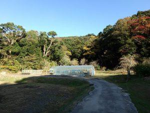 千葉県南房総市中の不動産、山林、ハウスの奥が当該物件です