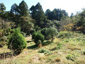 千葉県鴨川市川代の不動産、山林、別荘、キャンプ場用地、夜は星がきれいだろうな