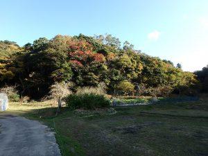 千葉県南房総市中の不動産、山林、南側の全景です