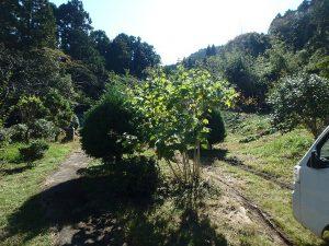 千葉県鴨川市川代の不動産、山林、別荘、キャンプ場用地、建物までのアプローチです