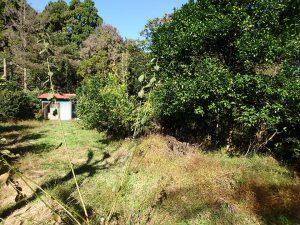 千葉県鴨川市川代の不動産、山林、別荘、キャンプ場用地、柑橘系の果樹もある