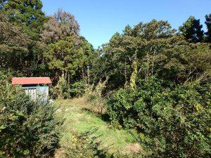 千葉県鴨川市川代の不動産、山林、別荘、キャンプ場用地、素晴らしい自然環境ですね
