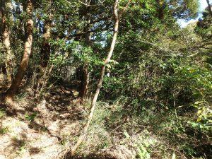 千葉県鴨川市川代の不動産、山林、別荘、キャンプ場用地、続いて建物北側に