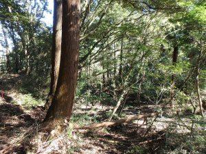 千葉県鴨川市川代の不動産、山林、別荘、キャンプ場用地、ここは未開拓ゾーン
