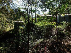 千葉県鴨川市川代の不動産、山林、別荘、キャンプ場用地、樹々が生い茂り少し暗い