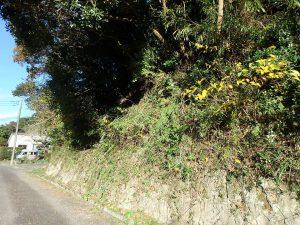 千葉県南房総市中の不動産、山林、接道は20m程で高さ5m