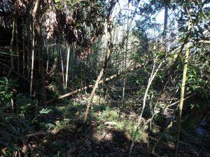 千葉県鴨川市川代の不動産、山林、別荘、キャンプ場用地、もっと進むと沢に出られる