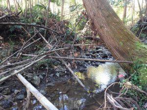千葉県鴨川市川代の不動産、山林、別荘、キャンプ場用地、きれいに掃除したいかな