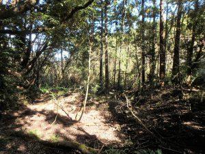 千葉県鴨川市川代の不動産、山林、別荘、キャンプ場用地、未知数の可能性がある物件