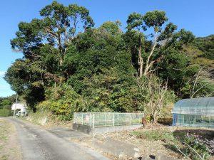 千葉県南房総市中の不動産、山林、開拓からのスタートです