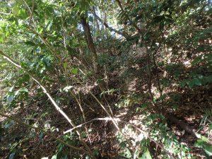 千葉県南房総市中の不動産、山林、結構藪が深い