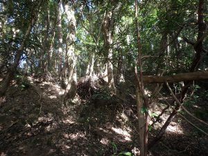千葉県南房総市中の不動産、山林、上の方に見えるのが物件