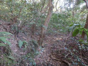 千葉県南房総市中の不動産、山林、斜面から上の方です