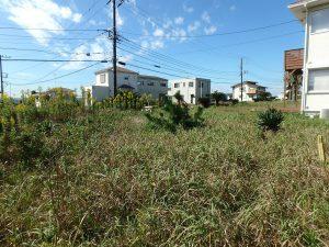 千葉県富津市千種新田の不動産、土地、海が見える、ケープショアガーデン、海一望、草が生い茂って撮影に苦戦
