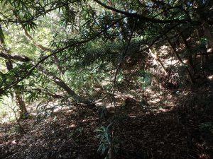 千葉県南房総市中の不動産、山林、尾根の方は比較的なだらか